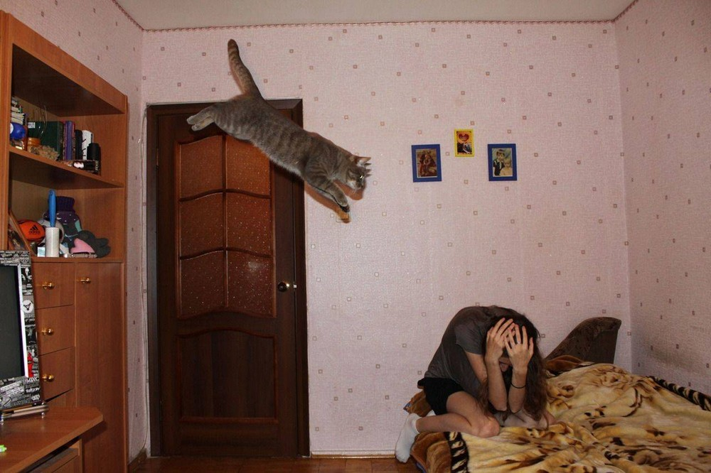 Атака хищника