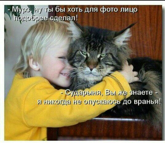 Честный кот