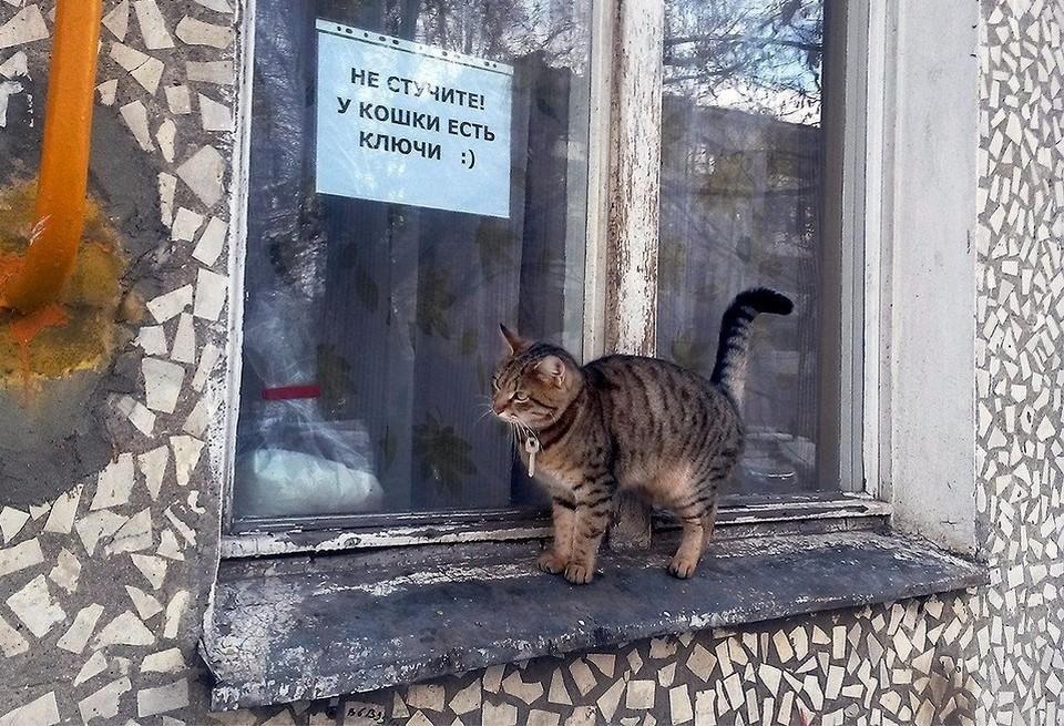Не стучите, у кошки есть ключи