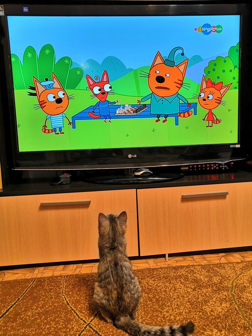 Мультфильм для кошек