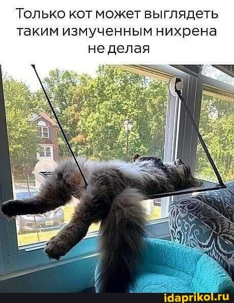 Измученный кот